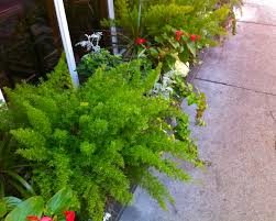 Beautiful Window Boxes Inspiration For Spring 2012 My Latest Window Box Photos From