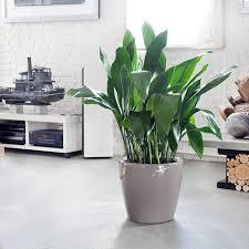 plants that grow in dark rooms top 5 indoor plants we recommend
