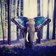elephant with butterfly ears shared by denisa high