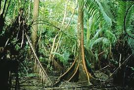 Tropical Dry Forest Animals And Plants - panama rainforest highly vulnerable to potential economic development