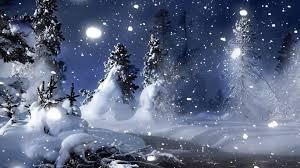 simplywallpapers com pine trees snow desktop bakcgrounds