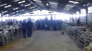 visit to sedgemoor livestock market youtube