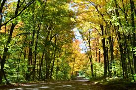 fall colors algonquin park album imgur