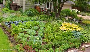 Front Yard Garden Ideas Front Lawn Vegetable Garden Design Coronado