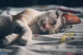 Sleep Number Bed Uneven Poway Chiropractor Family Wellness Clinic Activate