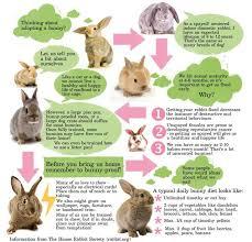 best 25 rabbit information ideas on rabbit toys