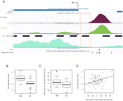 regulation of the boundaries of accessible chromatin