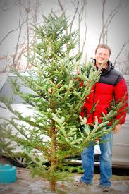cut your own christmas tree farm cut your own christmas tree mom