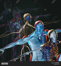 Nervous System Human Anatomy Human Anatomy Exploded View Deconstructed Layers Separate