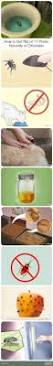 How To Get Rid Of Bed Bugs At Home Best 25 Bed Bug Spray Ideas On Pinterest Bed Bugs Hotels