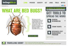 Bed Bugs How Do You Get Them Bed Bugs In Canada A Rising Crisis For Canadians