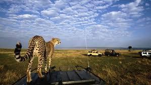 safari 14 days safari and zanzibar two weeks in tanzania u0026 zanzibar beach