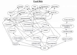 Food Chains Worksheet Uncategorized Food Web Worksheet High Klimttreeoflife