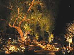 california pepper tree lit up at photo courtesy of shirley