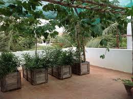 Ideas For Terrace Garden My Vegetable Terrace Garden Organic Thoughts Ideas For