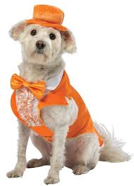 Halloween Costumes Dogs 7 Dog Costumes Images Animal Costumes