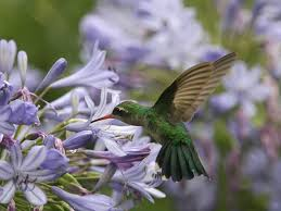 hummingbird flowers the best flowers to attract butterflies bees and hummingbirds