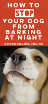 best 25 dog barking at night ideas on pinterest miami hear