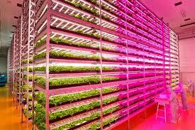 japanese farmer builds epic indoor vegetable factory youtube