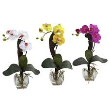 orchid arrangements nearly mini phalaenopsis orchid arrangement set of 3