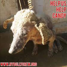 Anteater Meme - this is candy please donate to her new york bully crew