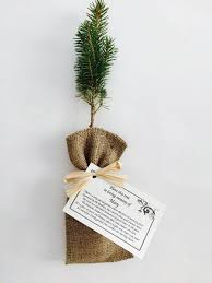 Memorial Service Favors What An Awesome Funeral Gift Have Friends And Family Grow Trees