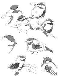 bird sketches by bettypimm on deviantart
