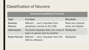 opening assignment 1 what are 2 functions of the nervous system 2