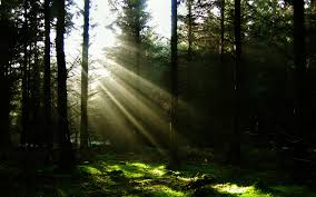sun through the trees wallpaper landscape nature wallpapers in jpg