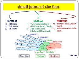Foot Ligament Anatomy Anatomy Of Small Joints Of The Foot