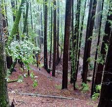 the u201cc u201d in the crystal springs 50k how to use races as effective