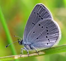 adur butterfly other arthropods list 2016