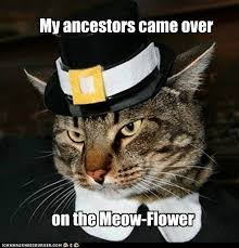 Happy Thanksgiving Meme - happy thanksgiving i can has cheezburger funny animal pictures