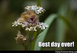 Best Day Ever Meme - funny flower pictures best day ever funny flower meme picture
