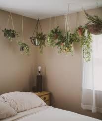 Plants For The Bedroom by 106 Best Indoor Plants Images On Pinterest Plants Indoor Plants