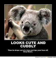 Koala Meme - koala meme google search funny stuff pinterest meme