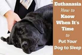 put dog to sleep euthanasia how to when it s time to put your dog