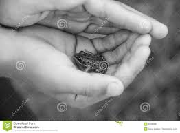 the child holds a frog stock photo image 93500897