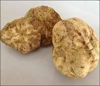 italian white truffle whole fresh white truffles alba italy 1 oz