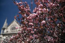 lexus flowers houston texas 2016 a year in photographs be good enjoy life help others