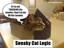 Sneaky Cat Meme - 203 best cute and cuddly and sneaky cats images on pinterest