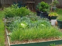 fruit vegetable growing sustainable gardening australia