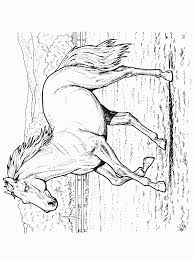 horse coloring pages horses pinterest horse wood burning