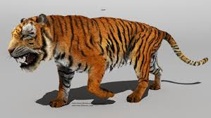 structure of a tiger the tiger project