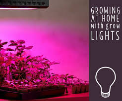 what type of lighting is best for a kitchen how to choose the best grow lights for indoor plants ideas
