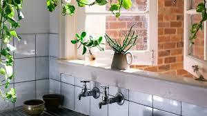 plante pour cuisine plante d intérieur entretien facile pas chère dépolluantes