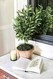 Herb Topiaries Diy Olive Topiary Tree Bless U0027er House