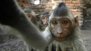 remember the monkey selfie peta are suing to give the monkey the