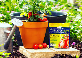 Vegetable Gardens In Florida by Tomatoes 101 Tomato Plant Care U0026 Fertilizer