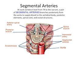 Human Vertebral Column Anatomy Anatomy Of Spine